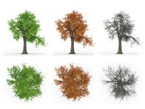 树年周期系列 库存图片