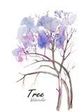 树 在白色背景w,水彩,花,花,水,例证,背景的手拉的水彩绘画, 库存图片