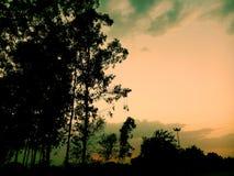 树&天空 图库摄影