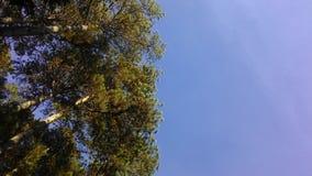 树&天空 库存图片