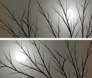 树水平的宽横幅分支反对月亮的 免版税库存图片