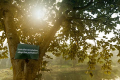树离开与太阳光芒从后面,冬天早晨场面 图库摄影