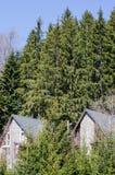 树围拢的相同村庄 免版税库存照片