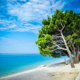 树围拢的美丽的天蓝色的蓝色地中海海滩 库存图片