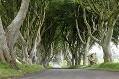 树黑暗的树篱大道在爱尔兰 免版税图库摄影