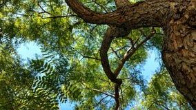 树结果 免版税库存照片