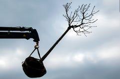 树移植 图库摄影