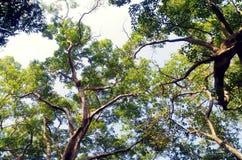 树/美好的自然 图库摄影