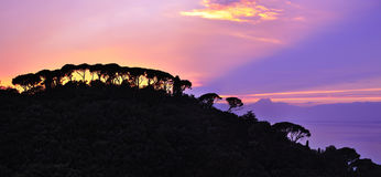树紫色日落剪影在小山的 免版税库存照片