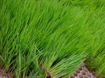 树绿色自然背景纹理 免版税库存照片