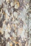 树细节背景 免版税库存图片
