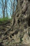 树细节 库存图片