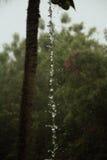 水树 库存图片