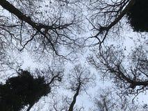 树` s天空 免版税库存照片