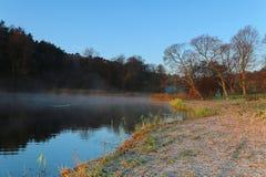 树a剪影由湖的每有雾的早晨 库存图片