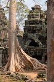 树Banteay Kdei寺庙,柬埔寨 免版税库存照片