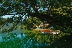 树brances的反射在湖的一片树荫下在斯洛文尼亚阿尔卑斯流血 库存照片