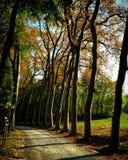 树demidoff托斯卡纳mugello风景 库存图片