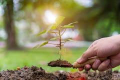 树glowth 种植结构树 在种植树的年轻人的特写镜头 免版税图库摄影