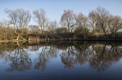 树Refletions在雏菊角落的湖 库存图片