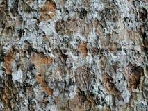 树skin纹理 库存照片