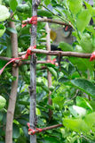 绳索栓与树 免版税库存照片