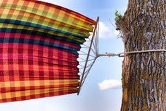 栓对树吊床在风摇摆 库存图片