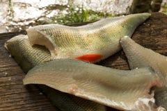 栖息在一个木去骨切片的委员会的鱼片 免版税库存照片