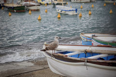 栖息在地方木小船的海鸥鸟在capri海岛南部 库存图片
