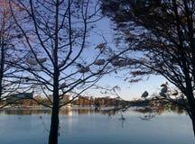 栖息在这棵树的朱鹭 图库摄影