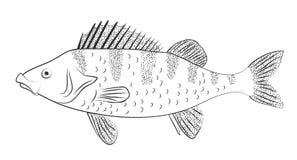 栖息处 传染媒介概述图象 皇族释放例证