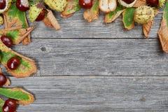 栗子叶子和种子在木背景的 免版税库存图片
