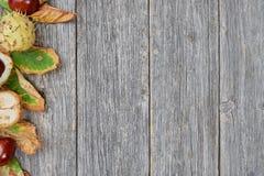 栗子叶子和种子在木背景的 库存照片