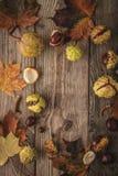 栗子和叶子框架在木背景垂直与影片过滤器作用 免版税库存图片