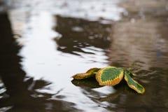 栗子在水坑离开在秋天天在老路面 免版税图库摄影