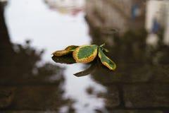 栗子在水坑离开在秋天天在老路面 免版税库存照片