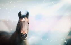 栗子在自然背景的马画象与太阳发出光线 免版税库存照片