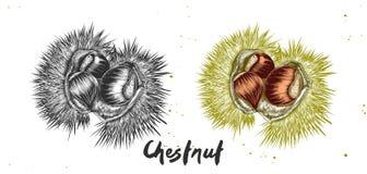 栗子手拉的剪影在单色和五颜六色的 详细的素食食物图画 免版税库存图片