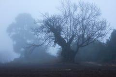 栗子秋天季节剪影  在领域的大橡木 免版税图库摄影