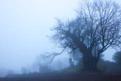 栗子秋天季节剪影  在领域的大橡木 免版税库存照片