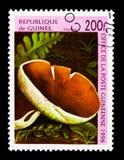 栗子蘑菇, serie,大约1996年 库存照片