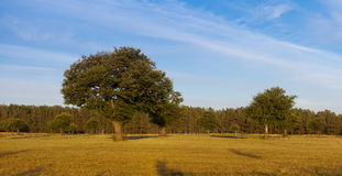 栗子领域金黄轻的结构树 免版税库存图片