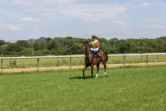 栗子马的骑师 库存照片