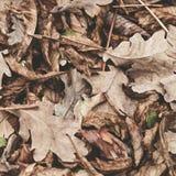 栗子,槭树,橡木,金合欢下落的叶子  布朗,红色,桔子和gren秋叶背景 颜色箭深度域浅软件 库存照片