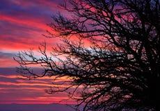 栗树分支在五颜六色的天空的在黎明 免版税库存图片