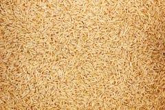样式和背景的健康未磨光的糙米 免版税库存图片