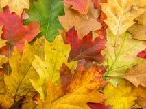 样式由生锈的多颜色叶子制成 库存照片