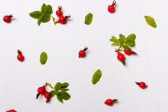 样式,野玫瑰果,莓果,叶子的构成 平的位置 免版税库存照片