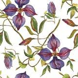 样式水彩紫罗兰花 向量例证