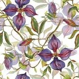 样式水彩紫罗兰花 库存例证